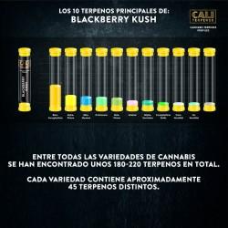 Terpenos Blackberry Kush
