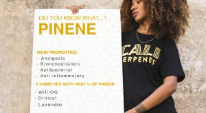 what is pinene terpene