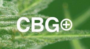 comprar cbg