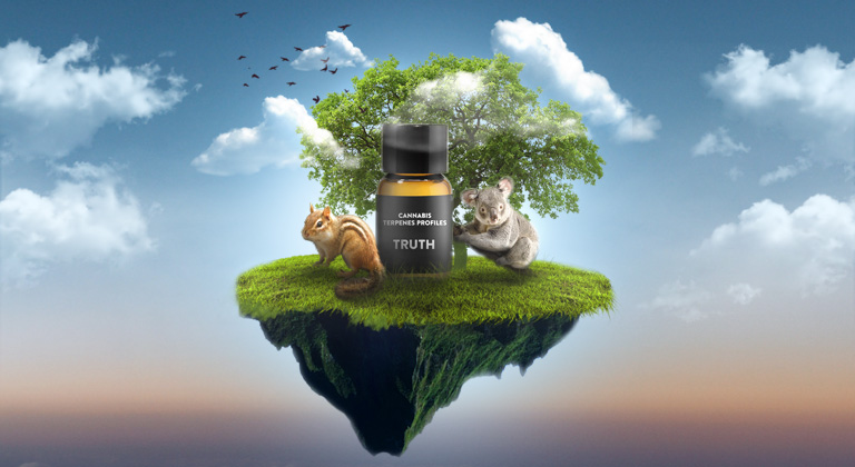 animals and terpenes