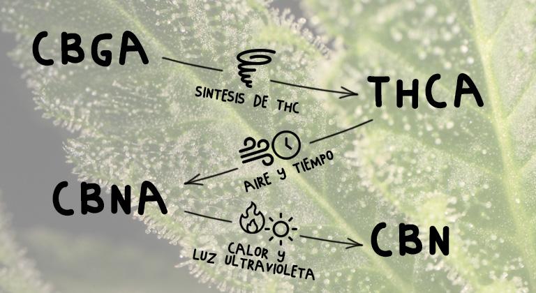 síntesis del CBN