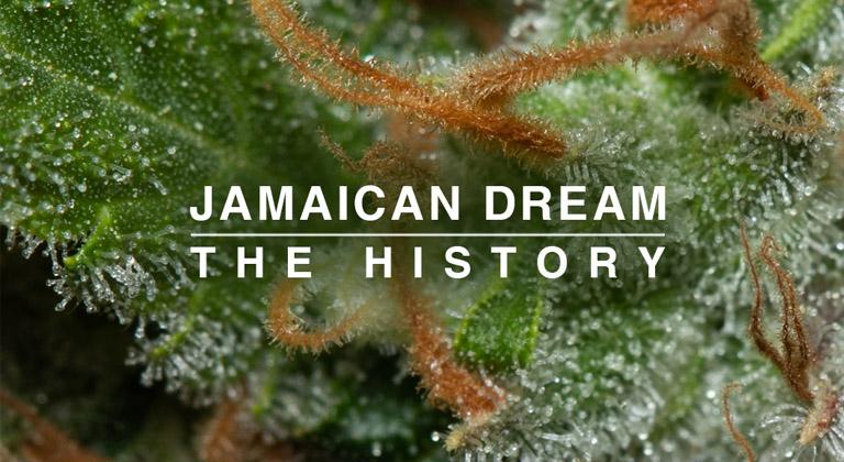 jamaican dream opiniones