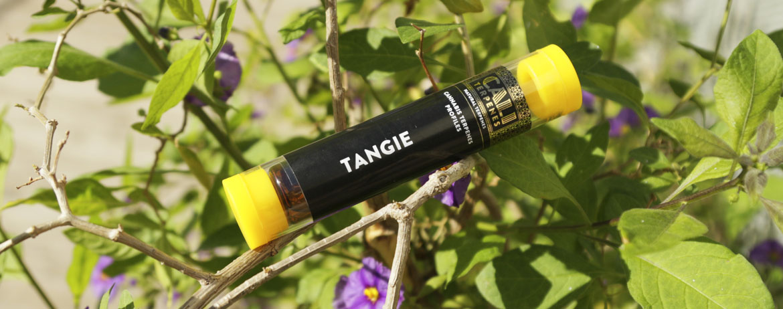 Cali Terpenes Tangie