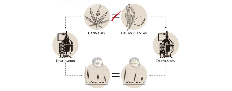 Perfiles de terpenos de cannabis